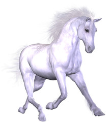Obraz na płótnie Canvas Beautiful Horse