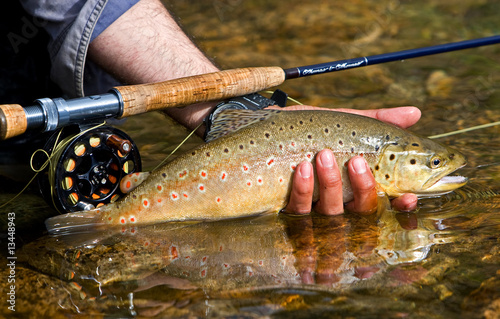 Acrylic Prints Fishing Trout