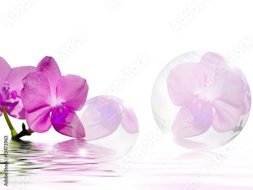 Photo Stands Orchid Aprilfrische