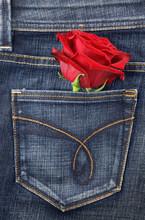 Red Rose In Jeans Pocket