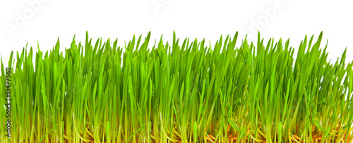 Deurstickers Gras Green grass isolated on white