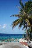 Fototapeta Krajobraz - Tropical Beach with coconut palm trees