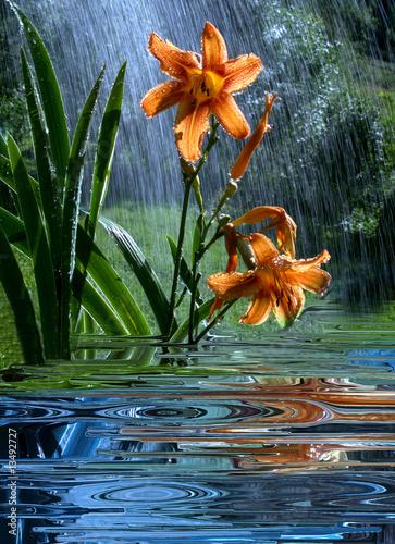 fototapeta na szkło Giglio selvatico sotto la pioggia