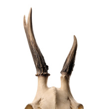 Skeleton Head With Antlers