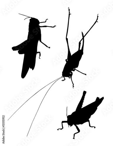 Obraz na płótnie grasshopper silhouettes