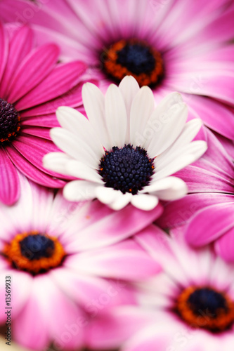 Doppelrollo mit Motiv - pink spring (von matka_Wariatka)