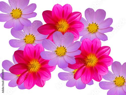 Poster de jardin Dahlia Flowers red blue camomiles decorative