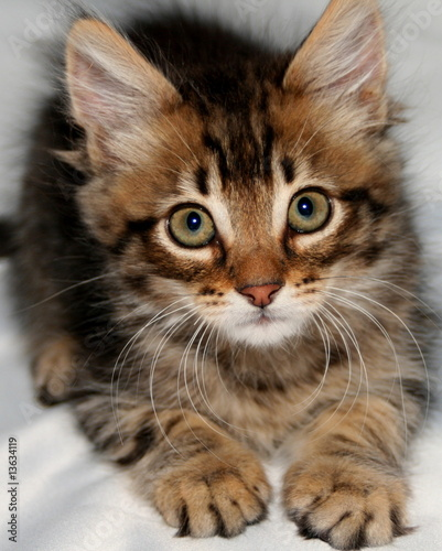 Canvas Prints Cat Scared kitten