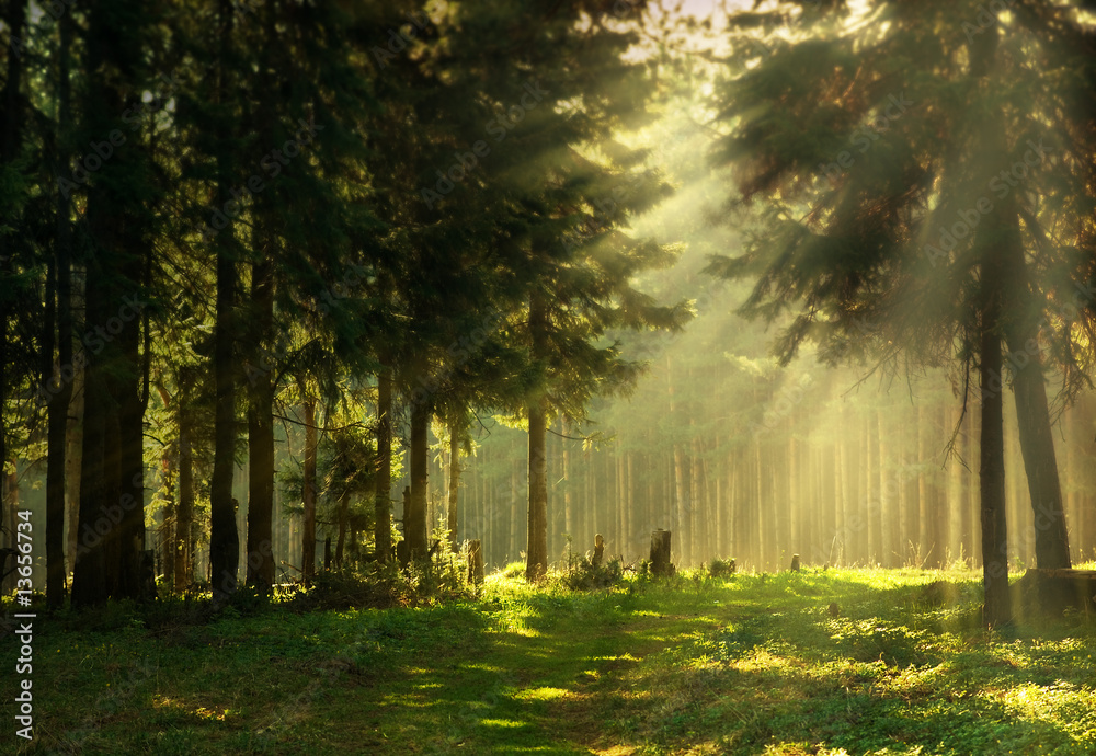 Fototapety, obrazy: Morning in a spring forest