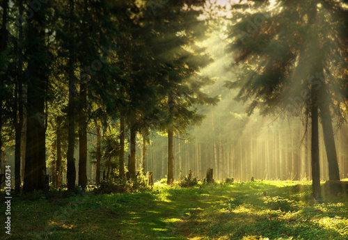 Morning in a spring forest