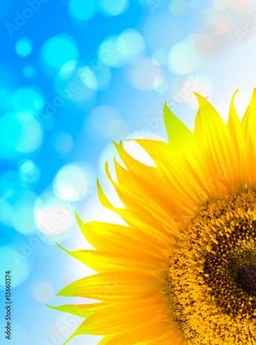 Foto-Schiebegardine ohne Schienensystem - Sunflowers (von mashe)