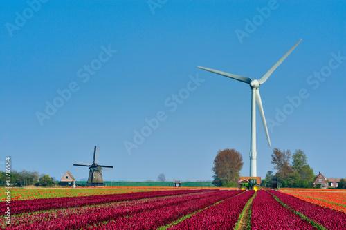 tulips  windmill and wind turbine