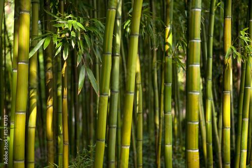 Foto op Plexiglas Bamboe bambous