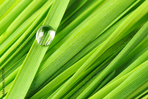Foto-Banner - Drops on a grass