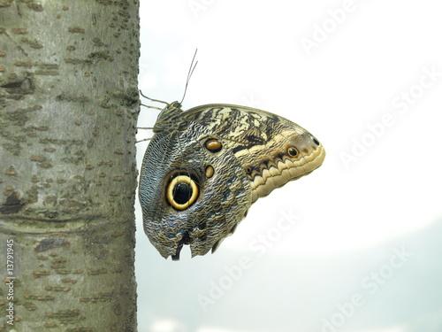 Fotografia  Butterfly 1
