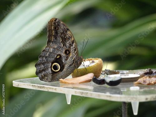 Fotografia  butterfly 3