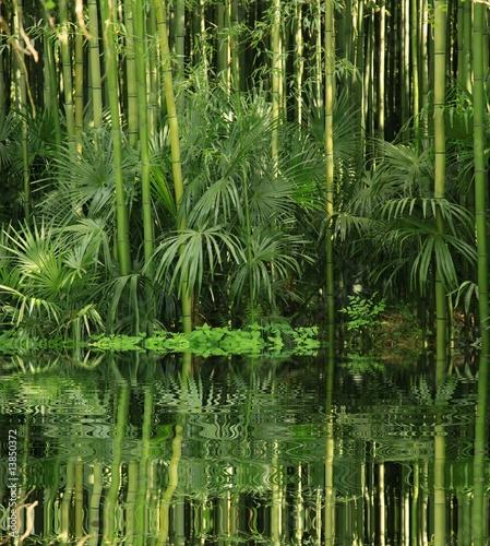Foto op Plexiglas Bamboe bambou au bord de l eau