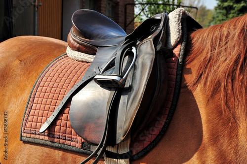 Tuinposter Paardrijden Gesatteltes Pferd