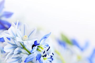 FototapetaSpring flowers background