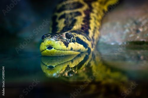 Yellow anaconda Canvas Print