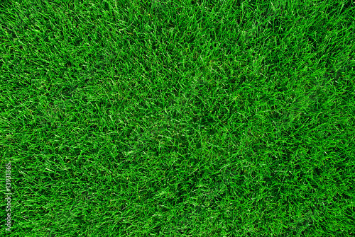 Canvas Prints Grass grass