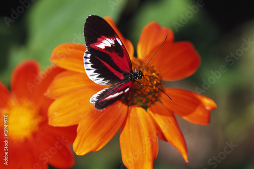 Photo  Butterfly on flower