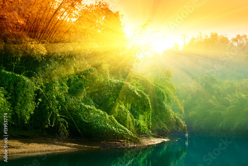 Poster Bambou sunset in jungle of Thailand