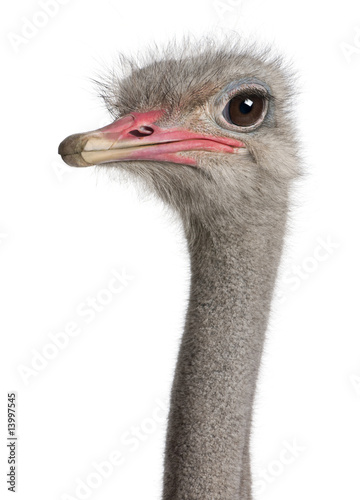 Deurstickers Struisvogel close-up on a ostrich's head