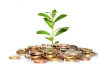 Money And Plant.