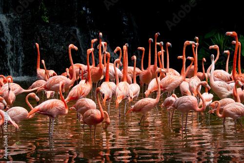 Photo  Pool of Flamingo