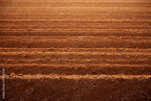Cuadros en Lienzo Ploughed red clay soil agriculture fields