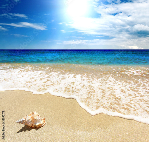 Foto-Kissen - Tranquil scene with Sea shellfish, blue sky, golden sand and small waves  (von Ovidiu Iordachi)