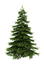 Spruce Tree Isolated On White ...