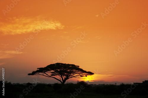 In de dag Australië Acacia Tree at Sunrise