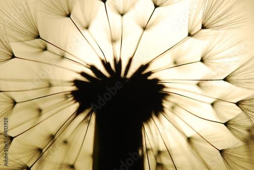 Fotobehang Macro dandelion seed