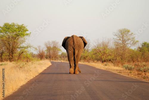 Fotobehang Olifant Strassenläufer