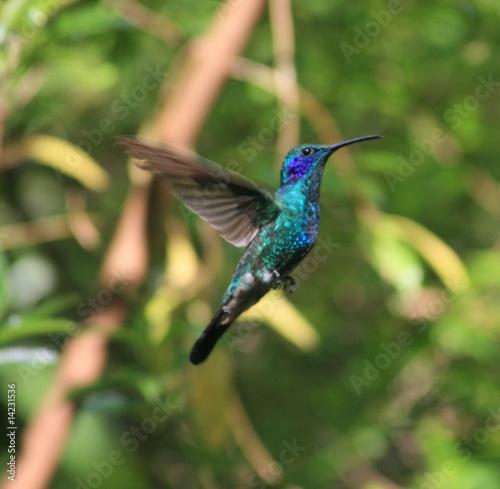 Foto-Fußmatte - Fliegender Kolibri, Hummingbird (von kiki)