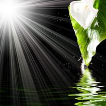 Beautiful Flower And Splash Of...