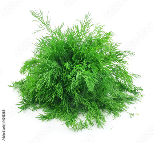 Garden Poster Plant Bunch of Ripe Dill Isolated on White