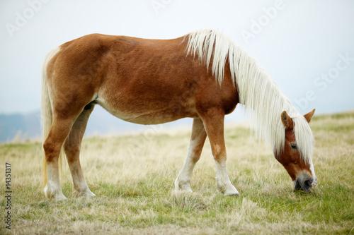 Foto-Fußmatte - Horse grazing (von ecobo)