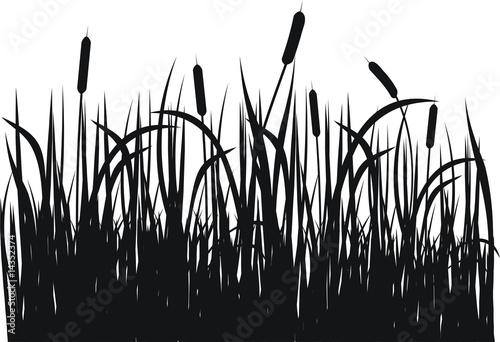 Obraz na płótnie Grass vector silhouette
