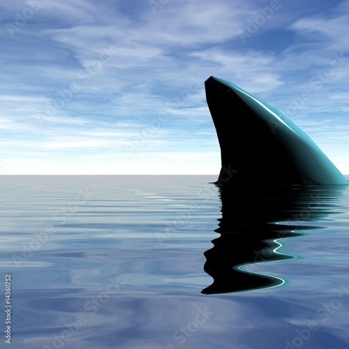 Photo aileron de requin