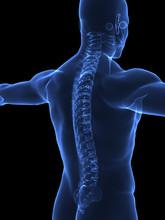 Human Spine X Ray Closeup