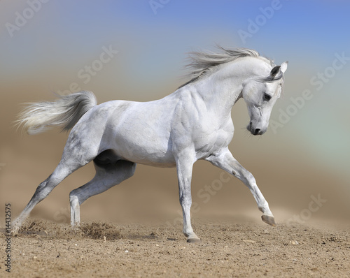 white horse stallion runs gallop in dust desert, collage paint