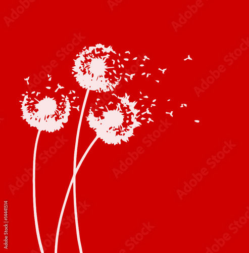 WHITE DANDELIONS ON RED BACKGROUIND