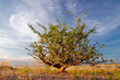 canvas print picture Desert plant and sky, Namibia, southern Africa