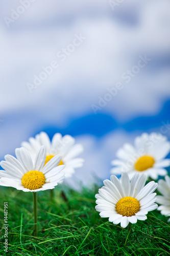 In de dag Madeliefjes Blumen