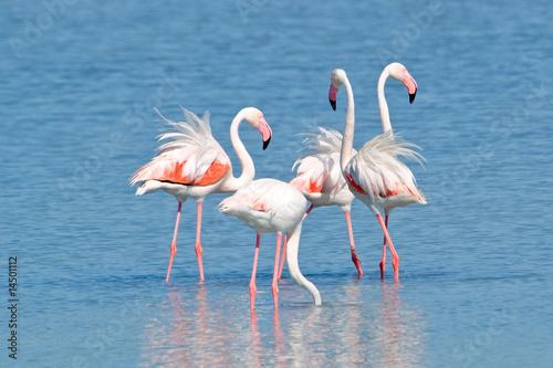 Papiers peints Flamingo Fenicotteri