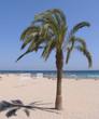 palm in beach sand