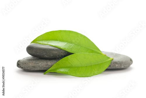 Doppelrollo mit Motiv - nature verte sur fond de galets gris - isolé sur blanc